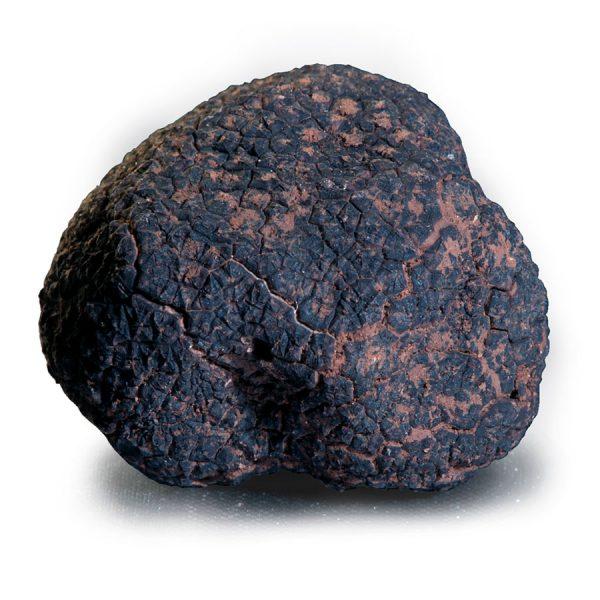 trufa negra plantación precio