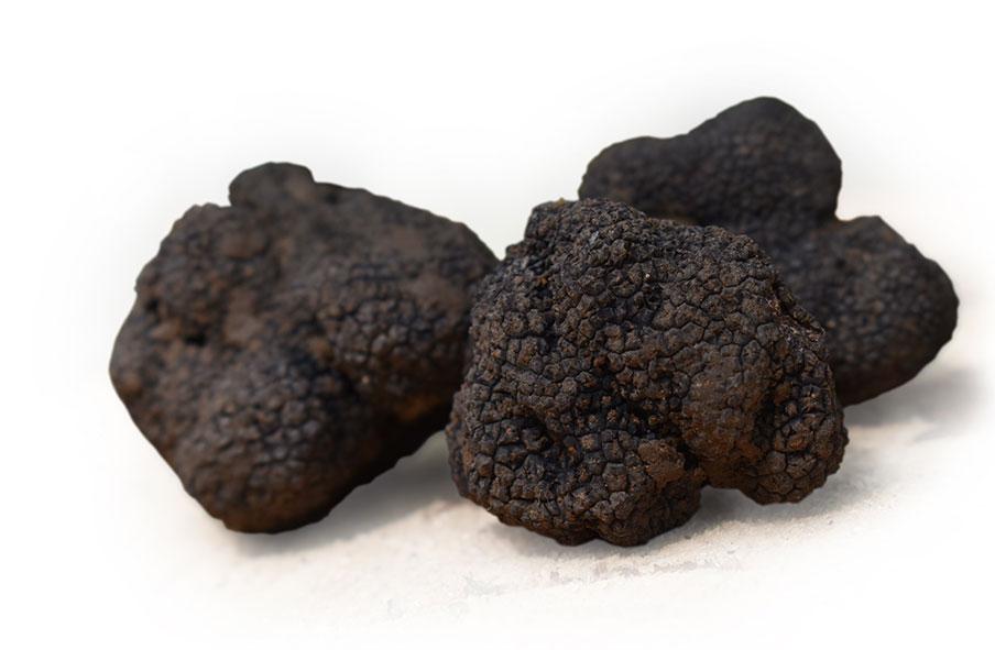 trufa negra teruel